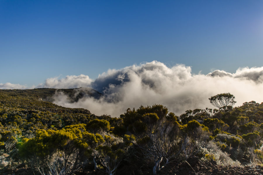 La végétation sur la route du volcan